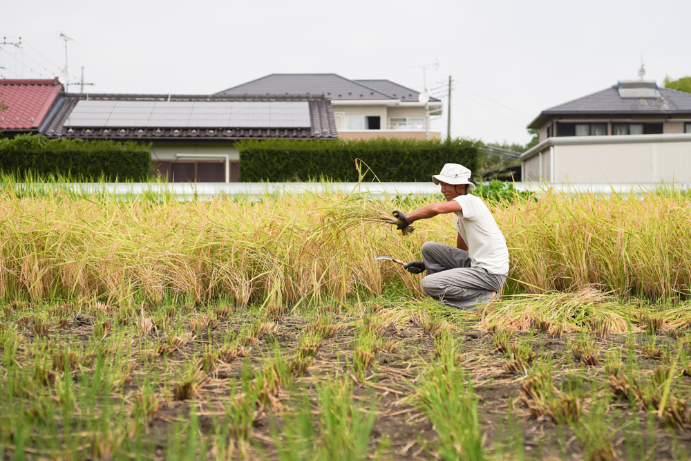 房総オルタナティブライスフィールド 初めての稲刈りDAY3.5+初めての脱穀DAY1
