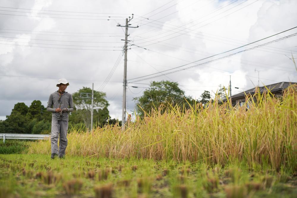 房総オルタナティブライスフィールド 初めての稲刈りDAY5 ついに稲刈り完了!とニンニクの植え付け準備