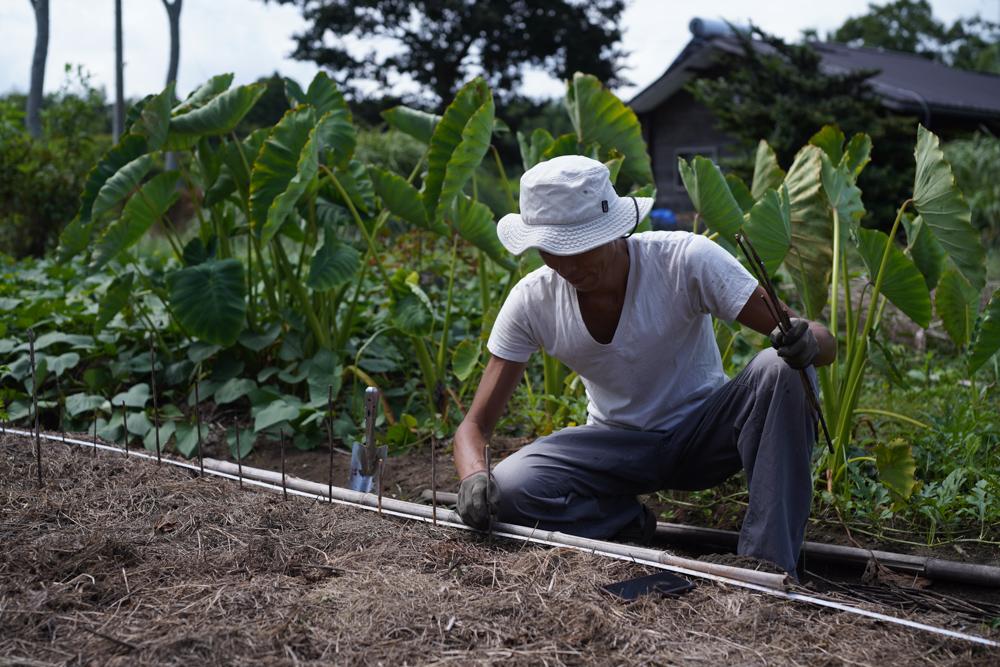 2020年 にんにくの植え付けと初めての脱穀DAY3