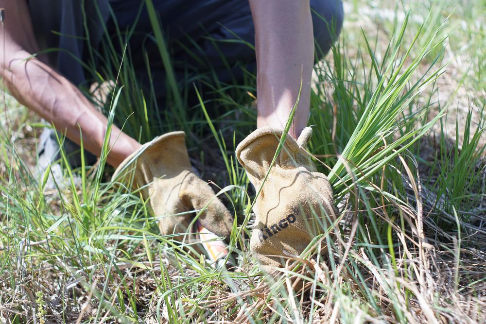 房総フィールドガーデン 雑草農法 畑の草刈り