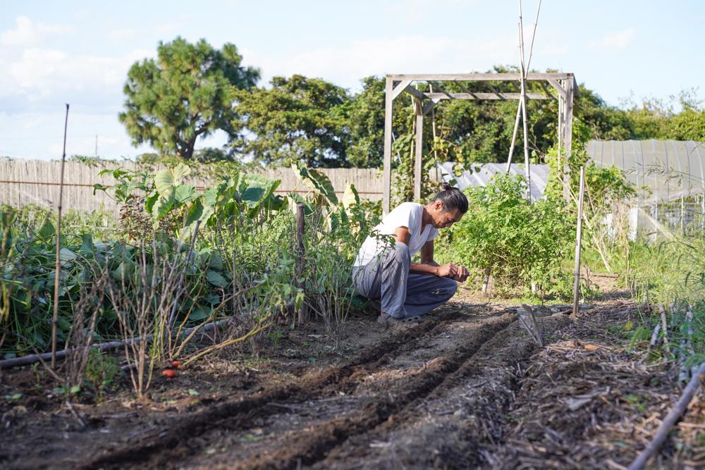 秋の畑の準備と大根・黒丸大根の種下ろし