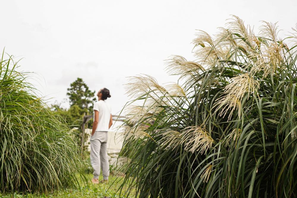 """気がついたら十五夜も過ぎ2020年も残り3ヶ月 9月下旬、お米の収穫を終えた途端、一気にパワーダウン↓↓ 稲刈りと脱穀、そして東京自宅の洗面所リノベーションに全エネルギーを注ぎ、秋を迎えたといった感じです さらに追い討ちをかけているのが秋の到来 今年は梅雨が明けた途端に猛暑日が始まり、9月に入ったとたん朝晩肌寒くなったりと、季節の変わり目がはっきりしています 世間では涼しくなって過ごしやすくなったということになるのでしょうか、寒さに弱い僕としては、これもパワーダウンの要因 ここ1週間は気分も上がらず、足ツボ 太衝(たいしょう)がズキズキと痛むは、猛烈な睡魔に襲われ良く寝ています(笑) 夏の反動で身体が「休め!」と言っているようですね こんな時は無理をせず様子を伺うのが一番 気持ち的には「なにかしなきゃ!」と焦りますが、経験則的に、こういう時は無理に動いても疲弊するだけ 少し休んでエネルギーがチャージできたら必然的に動き出すはずです * 10月に入った途端、東証のシステムがダウンするは、大統領選挙を控えたトランプ大統領もコロナに感染するし、波乱が続いている2020年 すっかり「あたりまえ」になっている新型コロナウイルスも変異し続けているといわれています スペイン風邪のときは第2波の死亡率が4倍になっています スペイン風邪は1918年の春に第1波がおき、第2波はその年の秋に来ています 世の中の変化の荒波を乗り越えるためにエネルギーをチャージし、アンチコロナウイルスのために免疫力を低下させないよう意識して過ごすのがこの秋の正しい過ごし方なのかもしれません そして、すでに日常になった新型コロナウイルス下の生活ですが、そろそろ「その次」を考えていかないといけません 大いなる無駄と矛盾を抱えた既存システムは徐々に壊れていく可能性が高く、ものごとの捉え方、生活のあり方、仕事の仕方はもう1、2回転しながら変化していくでしょう なにを拠り所にし、どこに軸足を置くかで見えてくる「次の世界」は変わってくるのだと思います いままで小規模ながら、DIYで居住空間を作り、ソーラーパネルで電力自給、無農薬・無肥料での畑作りをしてきて、2020年は主食となるお米を作るところまでたどり着きました 振り返ってみれば、外部依存度を減らし、自然の力を借りながら「自分でできることは自分でする」というスタンスで続けてきたのがオルタナティブライフであり、結果的に得られたものは「生きていくための基盤はなんとかなりそう」という安心感 お米づくりを通じて""""自分ができる""""ことの幅が広がったと同時に、またひとつ""""自分でできる""""という安心感を得ることができました と同時に範囲や規模が広がってくると1人ではやりきれないことも出てくるなぁと感じています さて、2021年はどうしていこうか? 暫しリカバリーしながら次のステップを考えていきたいと思う2020年の初秋でした"""