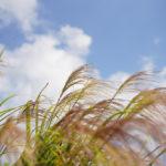 夏のような秋の日に春の畑を想う そら豆区画の準備