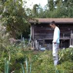 落花生とさつま芋の試し掘り