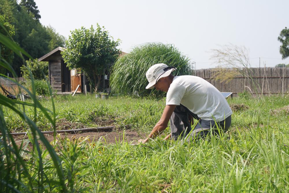 ジャガイモ畑の草むしり
