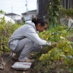 2020年秋の収穫祭 小豆の収穫始まる、テレワークの合間の野良仕事
