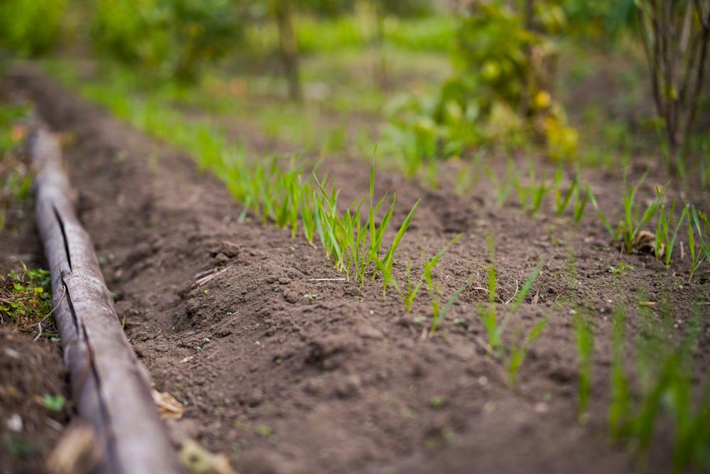 房総フィールド 新嘗祭と小豆の収穫