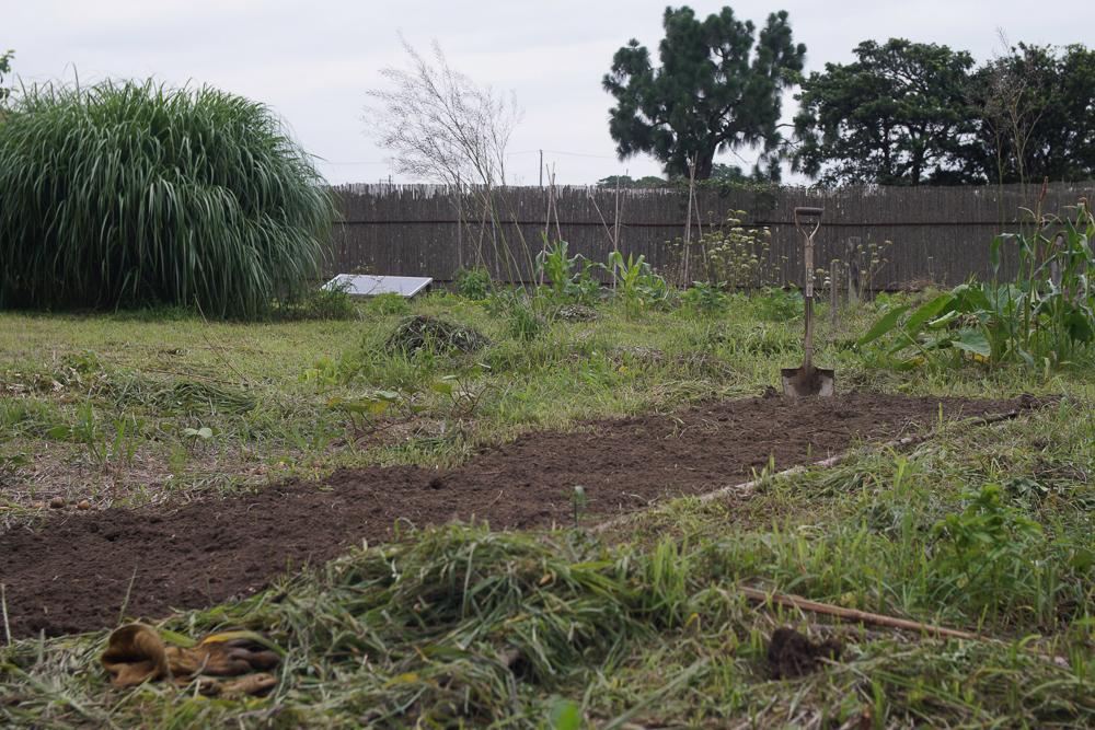 安納芋の畑準備