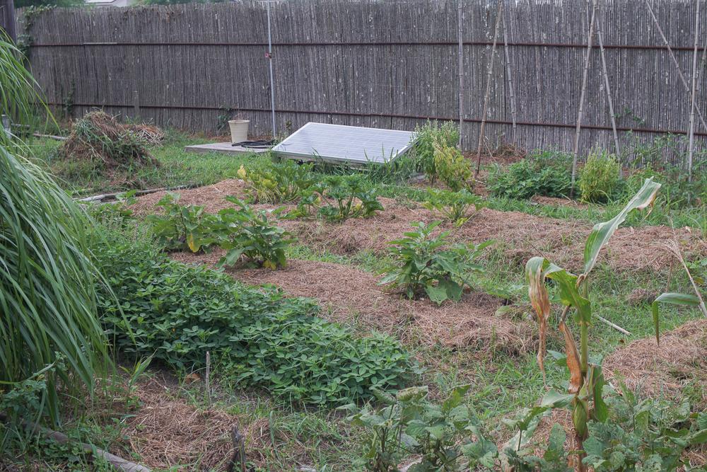 房総フィールドガーデン 雑草農法 美しき畑
