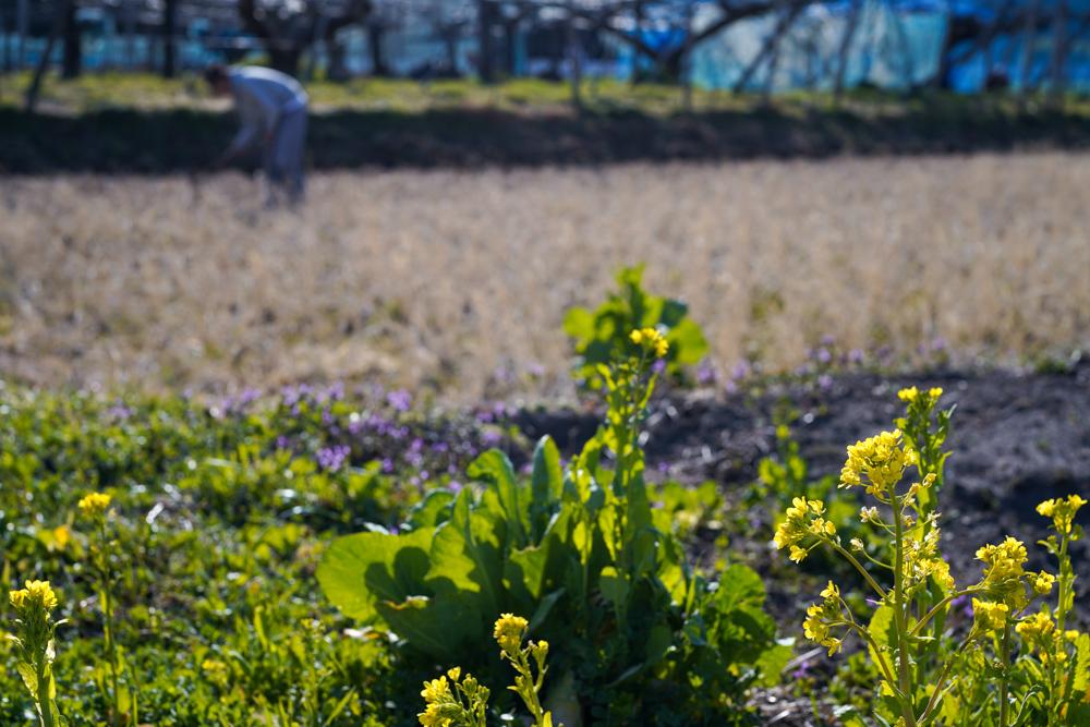 春の田起こし DAY2 野良仕事と中抜きの関係について考える