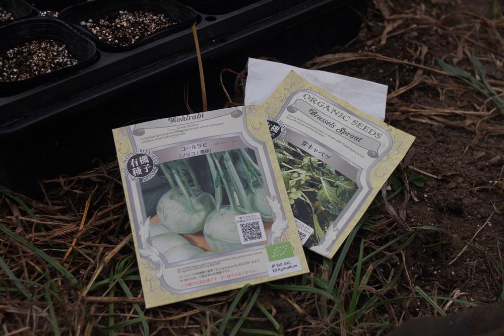 コールラビ、芽キャベツの種下ろし