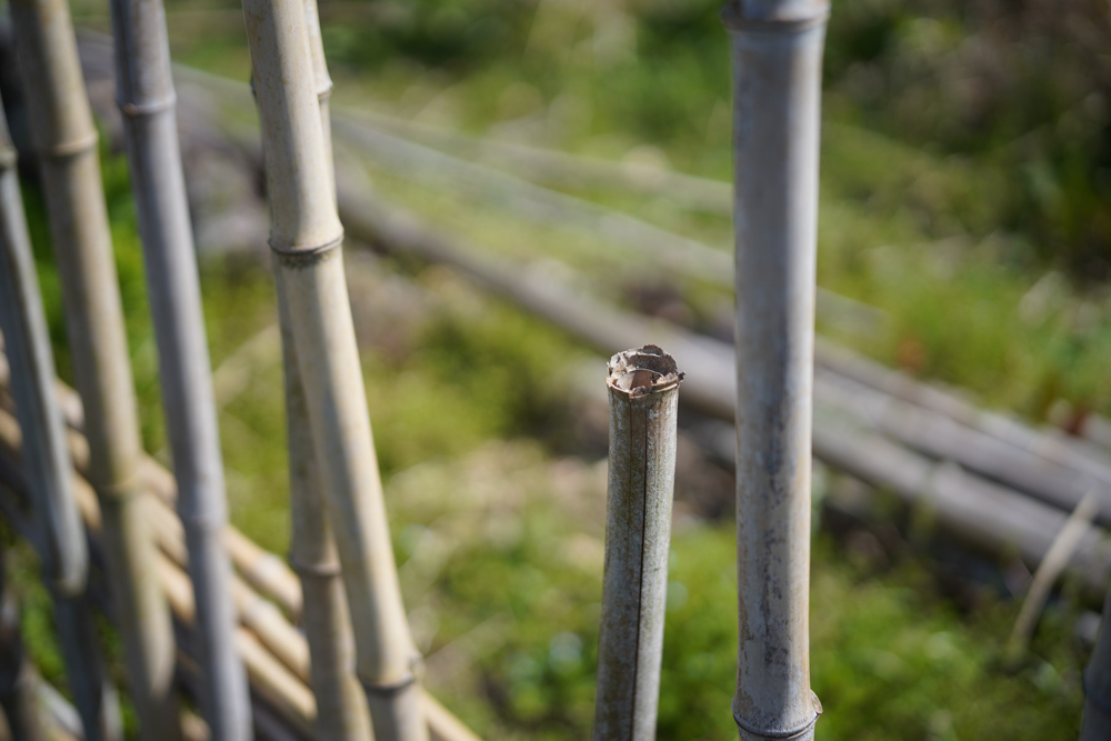 パーゴラの竹垣修復 2021