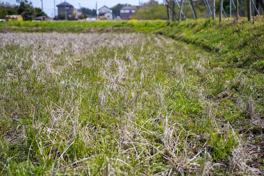 春の田おこしDAY9 ラウンド2、始まる