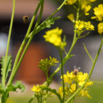 ミツバチが間接的に与えてくれるものと効率化のバランス