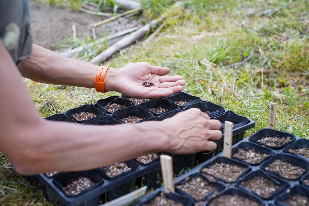 種まき・種まき・種まき ピーナッツ、黄もちトウモロコシ、シュヴァルツアーポップコーン、ひまわり、謎のハーブのタネ
