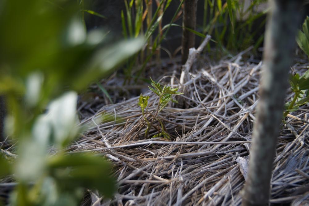 畑はやっぱりデザインだと思う 夏の畑をイメージしながら種を蒔く