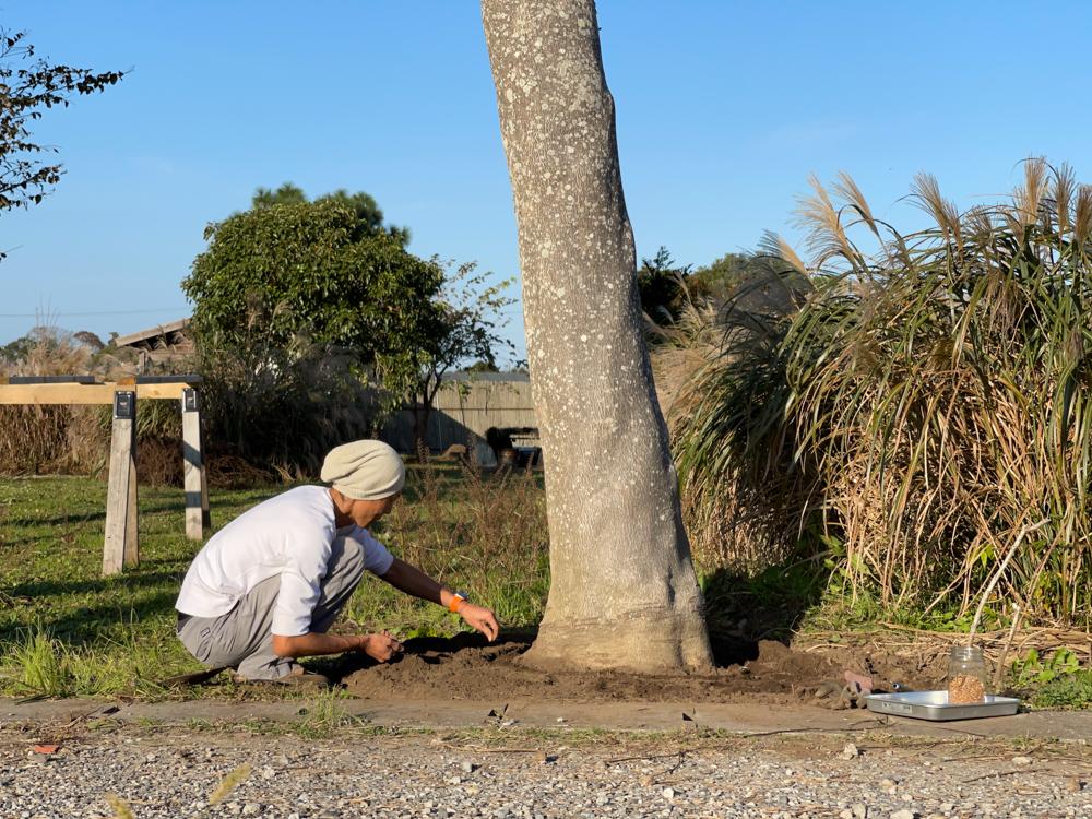 iPhone 12 Pro Maxで撮る房総フィールド野良仕事 玉ねぎとひよこ豆の苗を植える