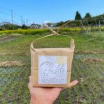房総オルタナティブ米デリバリーと里芋とSUP+ハイビスカス帰京・芽キャベツの苗を植える