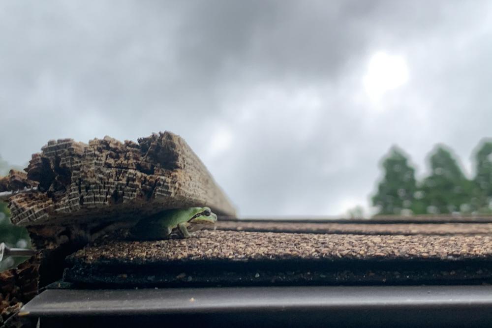 小屋の屋根にカエル