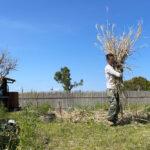 ススキの刈り取りと鳥の巣の神事
