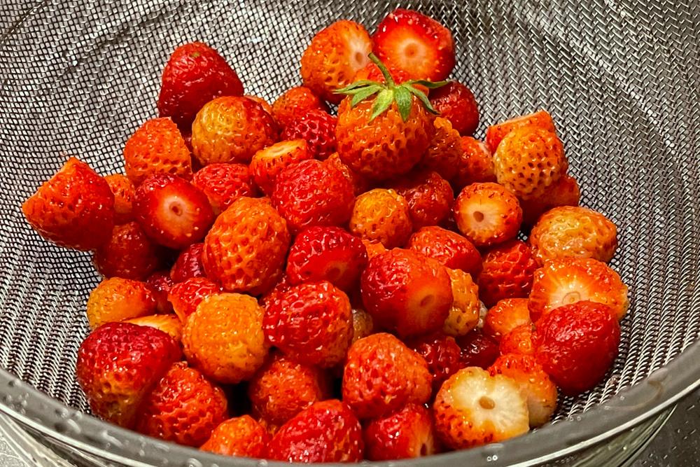 マックシェイクストロベリー好きが作る、房総フィールド産イチゴを使ったオーガニックなオルタナティブストロベリーシェイク
