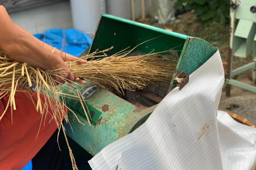 房総オルタナティブライスフィールド 初めての稲刈りDAY2.5 ソーホースブラケットで刈り取った稲を掛ける 稲架 はざを作る、足踏み脱殼機のレクチャー