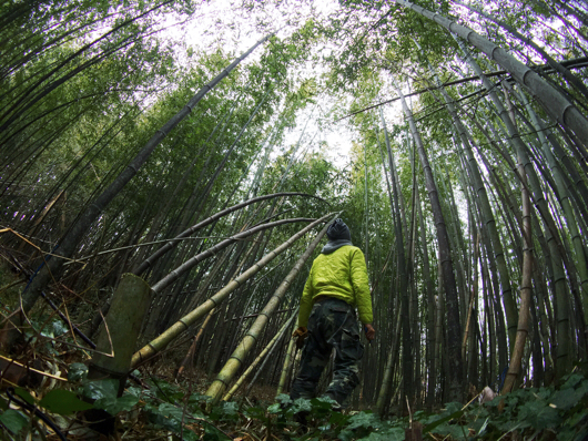 Bamboo Forest with Moment Original Superfish Lens